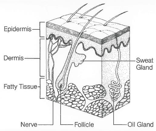 Skin Health  Prevention And Treatment Of Skin Breakdown